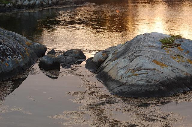 kelpa u vody