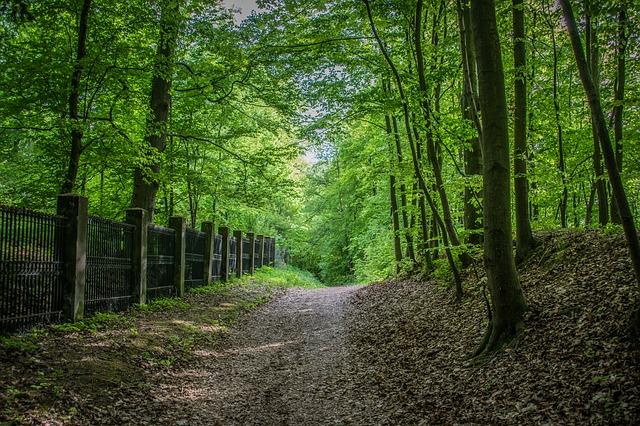 příroda v Praze