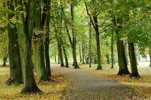 podzim v pražském parku