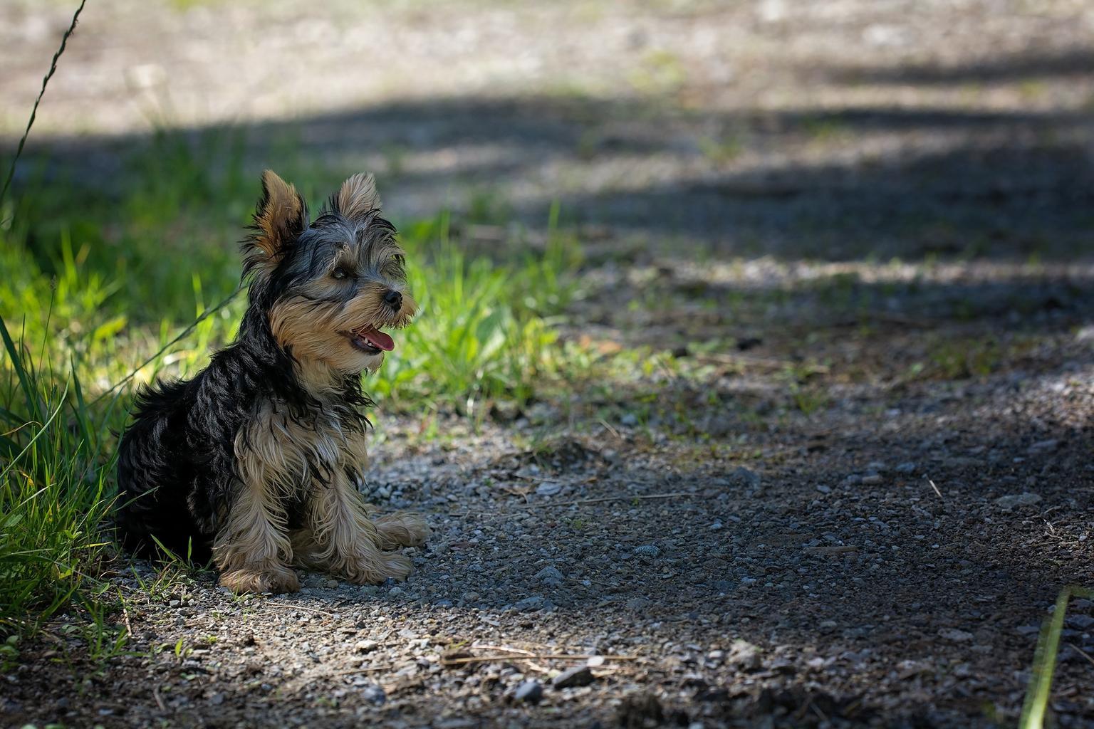 Zdraví vašich zvířecích přátel je základem kjejich pohodě
